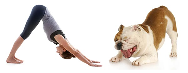 Tư thế chó cúi đầu (Downward Dog)
